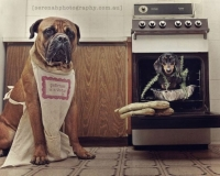 Creative Pet Photographer Shoots Her Adorable Three Dogs